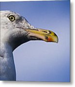 Seagull - Cape Neddick - Maine Metal Print