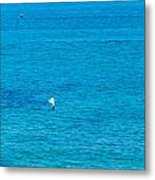 Seagull Cruising Over Azure Blue Sea Metal Print