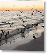 Seagulls Feasting Metal Print