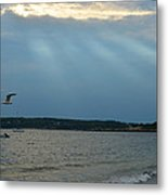 Seagull Flying Over Niles Beach Metal Print