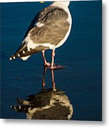 Seagull Harris Beach - Oregon Metal Print