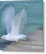 Seagull In Flight Metal Print