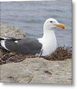 Seagull Nest Metal Print