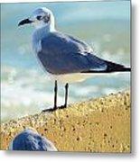 Seagull On Sea Wall Metal Print