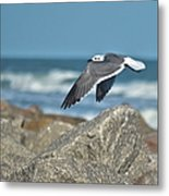 Seagull Parallel Metal Print