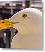 Seagull Profile Metal Print