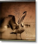 Seagull Ready To Fly Metal Print