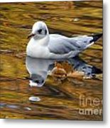 Seagull Resting Among Fall Leaves Metal Print