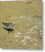 Seagull Scurry  Metal Print