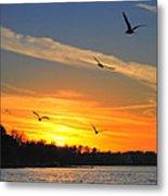 Seagull Serenity Metal Print