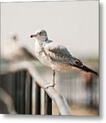 Seagull Standing On Rail Metal Print