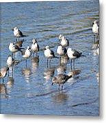Seagull Sunrise Metal Print
