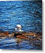 Seagull Wings Lifted Metal Print