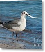 Seagull With Fish 1 Metal Print