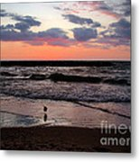 Seagull With Sunset Metal Print