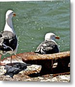 Seagulls Against Rust Metal Print