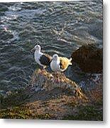 Seagulls Aka Pismo Poopers Metal Print
