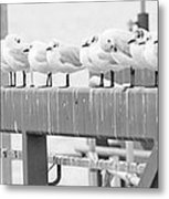 Seagulls In A Row Metal Print