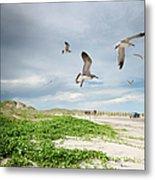 Seagulls In Flight At North Padre Metal Print