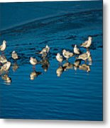 Seagulls On Frozen Lake Metal Print