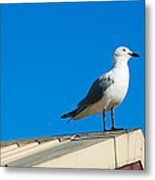Seagulls On Roof Top Metal Print