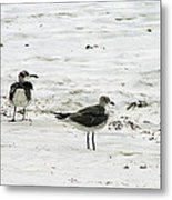 Seagulls On The Beach Metal Print