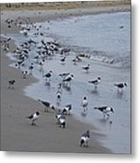 Seagulls On The Delaware Bay Metal Print by Bill Cannon