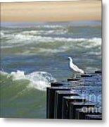 Seagull's Perch Metal Print