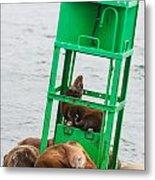 Seal Hammock Metal Print