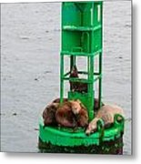 Seal Nap Time Metal Print