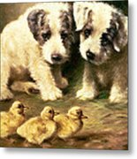 Sealyham Puppies And Ducklings Metal Print
