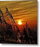Seaoats And Sunrise Hatteras Island 1 7/31 Metal Print