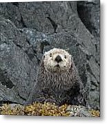 Seaotter - The Old Man Metal Print