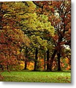 Searching For Maple Magic Metal Print
