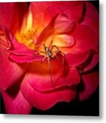Searching For Miss Muffet Metal Print