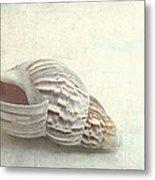 Seashell 6800 Metal Print