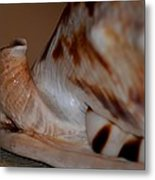Seashell Abstract 1 Metal Print