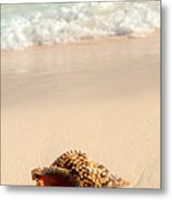 Seashell And Ocean Wave Metal Print