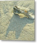 Seashell And Shadow On Sand Metal Print