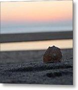 Seashell Before Sunrise Metal Print