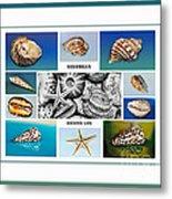Seashell Collection 3 - Collage Metal Print