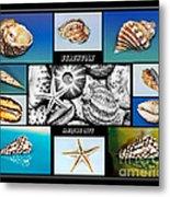 Seashell Collection Metal Print by Kaye Menner
