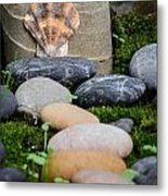 Seashell In The Garden Iv Metal Print