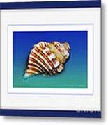 Seashell Wall Art 1 - Blue Frame Metal Print