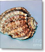 Seashell Wall Art 9 - Harpa Ventricosa Metal Print