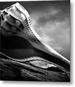 Seashell Without The Sea 3 Metal Print