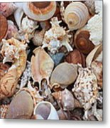 Seashells - Vertical Metal Print