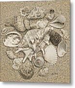 Seashells Collection Drawing Metal Print