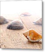 Seashells On Wood Dock Metal Print