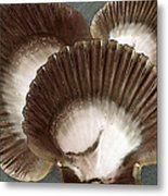 Seashells Spectacular No 22 Metal Print by Ben and Raisa Gertsberg